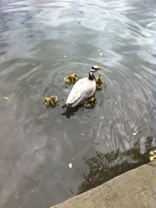 Duck Sanctuary in town