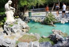 Pond of turtles